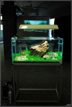 31 best aquarium decoration ideas images aquarium decorations rh pinterest com