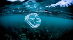 The world's oceans will be filled with more plastic than fish by 2050, the World Economic Forum said. Plastic has become one of the world's most popular mat