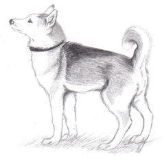 värillinen piirretty koira - Google-haku