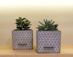 #greenery #greeneryartofplants #succulents #cactus #chania #crete