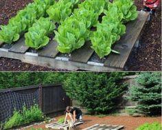 planter-pallet