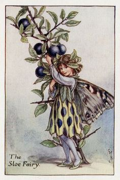 Sloe Flower Fairy Vintage Print c1927 Cicely Mary by TheOldMapShop