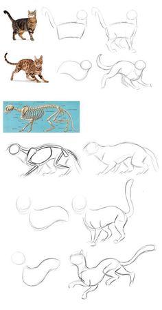 Cat drawing poses sketch Cat drawing poses sketch Source by . Cat Anatomy, Anatomy Drawing, Manga Drawing, Drawing Sketches, Drawing Tips, Drawing Poses, Drawing Ideas, Posture Drawing, Animal Anatomy