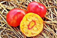 Hazel Mae - Seeds of Tomatoes - TomatoEden Site