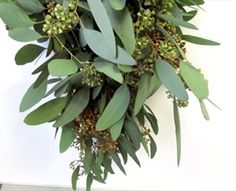 Seeded Eucalyptus -beautiful drapey foliage! adds softness