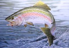 ... Delaware Trout Stamp Print, Rainbow Trout - Angling & Fly Fishing Art
