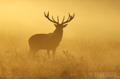 GOLDEN MIST by Lee Fisher on 500px