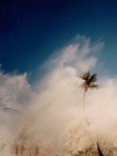 Sand storm palm tree