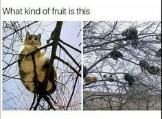 nevermind that where can i get this fruit tree