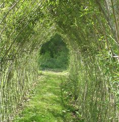 """""""Living Willow"""" means using long, large living willow rods and pushing them into the ground.."""