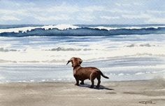 Dachshund Beach by David J. Rogers  This reminds me of our Molly. She loved going to the beach!!!