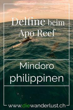 Wenn du gerne schnorchelst und tauchst, dann bist du auf dem Apo Reef genau richtig. Delfine und Haie sind keine seltenheit. Wir habens ausprobiert und sind von Sablayang mit dem Boot zum Apo Reef gefahren um dort zu tauchen. Alle wichtigen Informationen findest du in unserem Artikel. #aporeef #sablayang #mindoro #philippinen #delfine #haie #tauchen #schnorcheln Bohol, Palawan, Mindoro, Cebu, Philippines Travel, To Go, Movie Posters, Berlin, Wanderlust