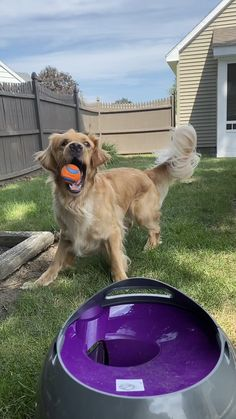 Cooper and Murphy show some serious catching skills with the Automatic Ball Launcher. They never miss!