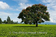 Photos and pictures of: Western Province Kenya | The Africa Image Library