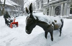 Donkey outside Old City Hall, Boston, MA - East Coast snowstorm, Blizzard Nemo