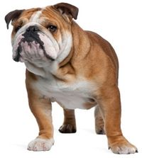 Best weight loss foods for dogs