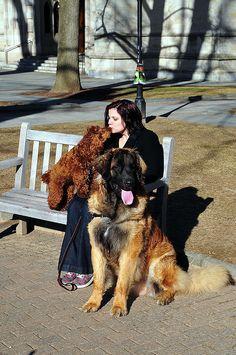 big dog little dog  Big Dogs = Man's Best Friend / www.PetWellbeing.org