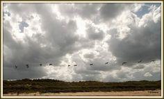 Pelican Landscape