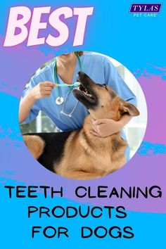Have you noticed your pups breath is a bit stinky as they come in for kisses? Just like people, dogs need to clean their teeth too. There are many options to get your dogs breath fresh again, we have the top 5 for your convieneince. #doggybreath #stinkydo Dog Dental Care, Pet Care, Stinky Dog Breath, Dog Teeth, Teeth Cleaning, Kisses, Best Dogs, Pup, German Shepherds