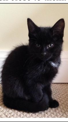 Liquorice has been adopted into a loving forever home!