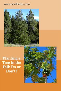 In the fall, generally there is less chance of drought or sun scorch and the cooler temperatures help roots grow stronger before the season changes. Seeds For Sale, Tree Seeds, Grass Seed, Garden Guide, Garden Seeds, Flower Seeds, Beautiful Gardens, Shrubs, Vines