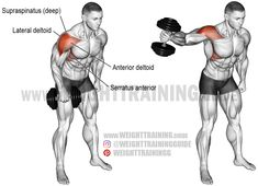 Dumbbell one-arm lateral raise exercise instructions and video – Boxen und Krafttraining Gym Workout Tips, Weight Training Workouts, Dumbbell Workout, Deltoid Workout, Training Exercises, Serratus Anterior Workout, Best Shoulder Workout, Shoulder Exercises, Lateral Raises