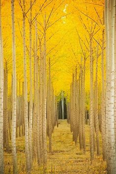 SUNSURFER; Vail, Colorado   Quoted from: http://pinterest.com/pin/10721250/  So gorgeous