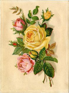 Vintage Stock Images - Yellow and Pink Roses - Graphics Fairy