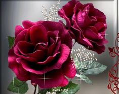 imagenes    Imagenes de Rosas
