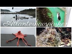 Pictures and video from Atlanterhavsparken, the aquarium in Ålesund is up on my blog! Alesund, Picture Video, Aquarium, Moose Art, About Me Blog, Memories, Holiday, Youtube, Pictures