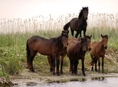 Danube Delta Horse - Romania. More reasons to visit Romania here: https://www.facebook.com/YouShouldVisitRomania