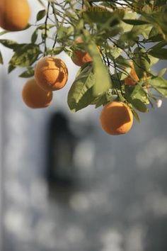 Sus Naranjas