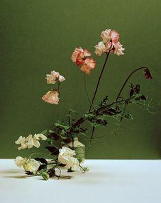 Sweet Pea (Lathyrus odoratus), Fern Varrow