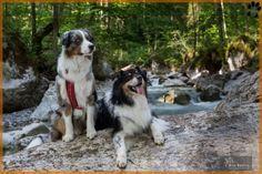 Op vakantie met de hond in Oostenrijk  Witte bergtoppen… Groene alpenweiden… Blauwgroene bergmeren… U samen op een heerlijke vakantie met de hond In en om het hondvriendelijke dorpje Piesendorf (Oostenrijk) en Lengdorf vlak bij Zell am See en Kaprun in het Oostenrijkse Salzburgerland nabij het nationaal park Hohe Tauern organiseert