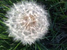 Always weeds to pull ....but still pretty