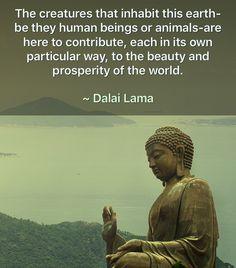 Buddha Quotes Love, Zen Quotes, Love Life Quotes, Nature Quotes, Inspirational Quotes, Motivational, Spiritual Enlightenment, Spiritual Awakening, Spirituality
