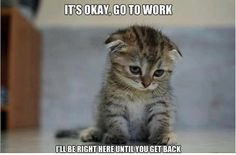 And that's how I think my cat feels everytime I leave the house. If he only knew... I'd never leave if I didn't have to.