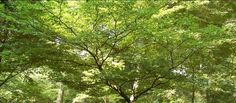 Tremendous Trees Lesson | Longwood Gardens