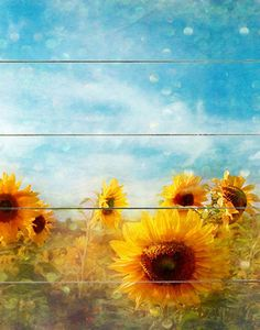 Sunflower Sky Wall Decor...would be so cool on a little wall in a sunflower themed bathroom :)