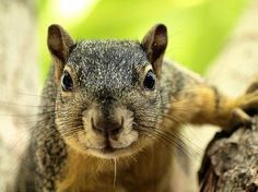 squirrel staring in window - Google Search