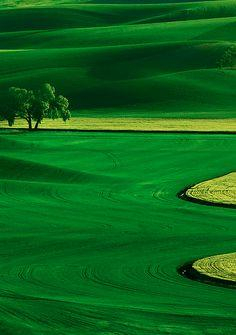 Palouse country in eastern Washington