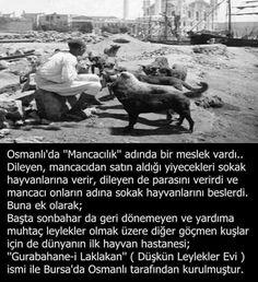 Keşke şimdide öyle olsa gerkes evinde et tavuk yiyordur bâri et artıklarınızı sokaktaki kedilere köpeklere verin aç hayvanlar.. I Want To Know, Did You Know, Turkish People, Islamic Teachings, Ottoman Empire, Things To Know, Karma, Istanbul, Poems