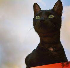 Gata no telhado  #gatonotelhado #animals #cat #boanoite by alyokhinfotografia http://www.australiaunwrapped.com/