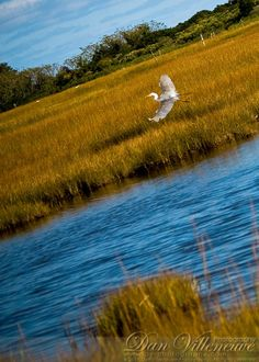 Egret. Hammonasset Beach State Park, Madison, CT Photographer: Dan Villeneuve