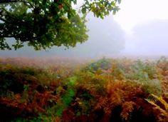 A Fog Over Ferns and Trees, Richmond Park, London, England