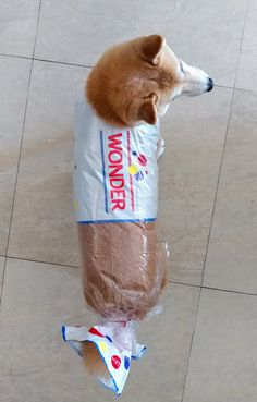 There are pet costumes. And then there are amazingly epic pet costumes. Here is a collection of the greatest pet Halloween costumes to ever grace the web. Funny Animal Jokes, Funny Dog Memes, Cute Funny Animals, Funny Animal Pictures, Cute Dogs, Funniest Memes, Hilarious Pictures, Doge Meme, Hilarious Sayings