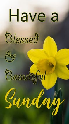 Blessed Morning Quotes, Happy Weekend Quotes, Good Morning Image Quotes, Blessed Sunday, Happy Morning, Morning Mood, Morning Coffee, Happy Sunday Images, Prayer For Mothers