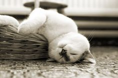 I wonder if this kitty is having dreams of falling?