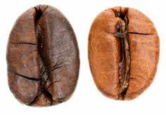 Robusta Kaffee wurde im 19. Jh. in Afrika entdeckt.