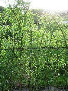 Saules tresses vannerie en exterieur pinterest photos for Decoration pour jardin exterieur 1 vannerie exterieure haie vivante en osier tresse abri